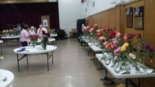 2011 North Bay Rose Show